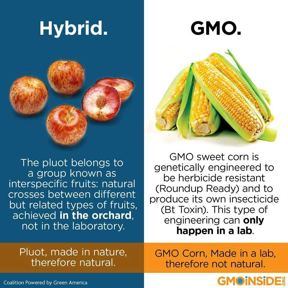 Hybrids Are Not The Same As Gmos The Simple Difference Is One Is
