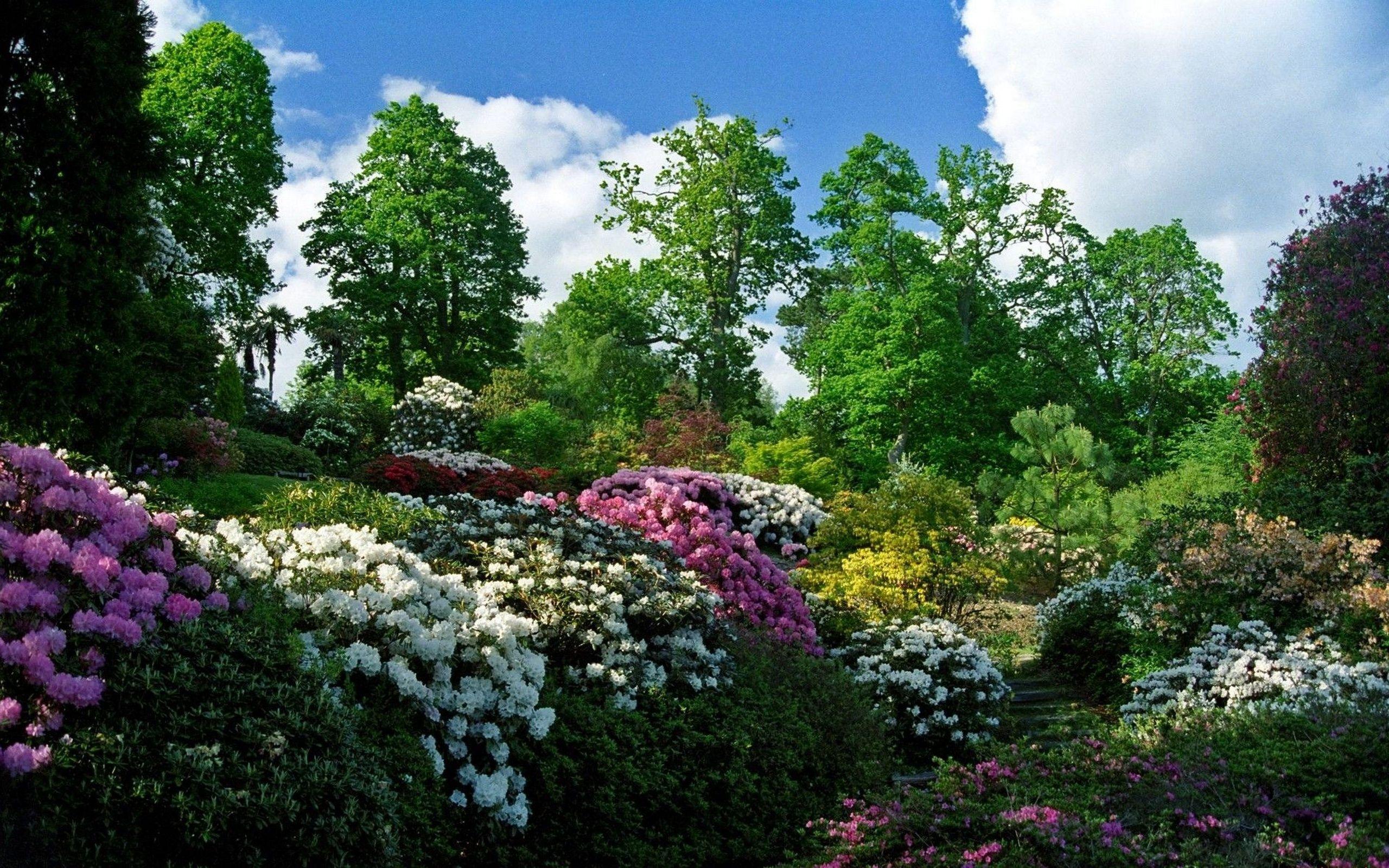 Картинки о мире растений