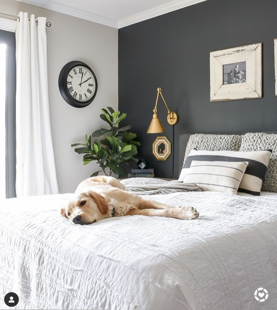 High Contrast Dark Painted Bedroom Accent Wall Sherwinwilliams