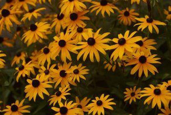 Plants with year round interest perennials are plants that come perennials are plants that come back year after year our perennial flowers and vines can provide your garden color without having to replant every season mightylinksfo