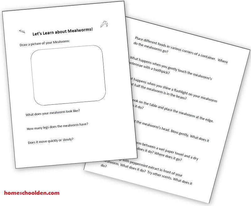 mealworms-activity-worksheet   Science   Pinterest   Activities ...