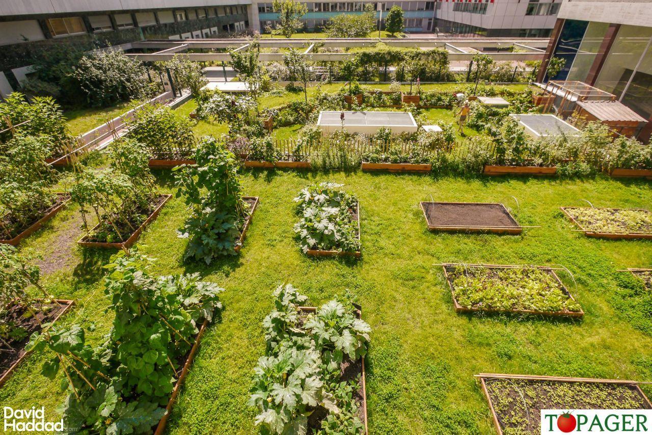 Pas besoin de jardin des potagers sur les toits de nos immeubles revelation pinterest le - Jardin sur terrasse toit dijon ...