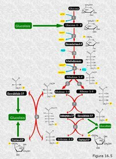 Por eso nunca va a la dieta del metabolismo acelerado pdf gratis