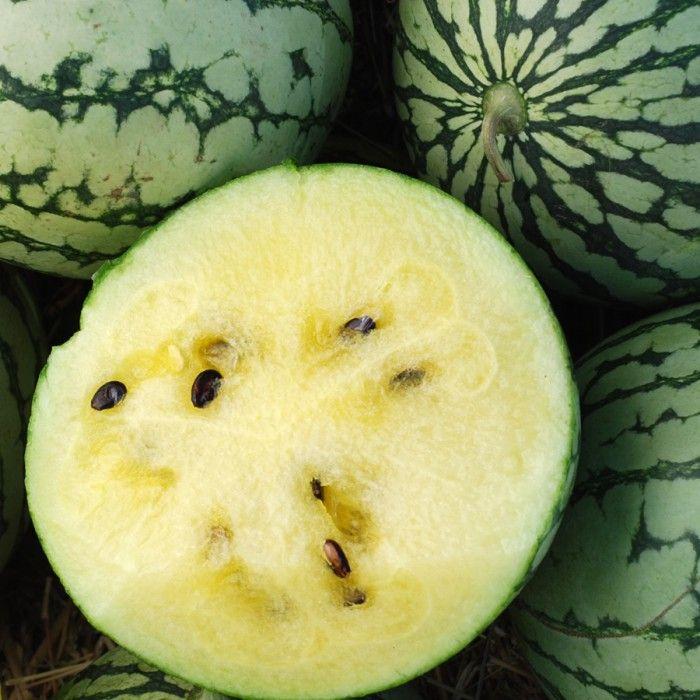 Melon Petite Yellow Watermelon Watermelon Seeds Watermelon Heirloom Seeds