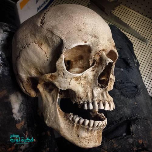 صور جماجم مرعبة جدا 2019 خلفيات جماجم نارية كيوت ملونه Hd 4 Skull Skull Anatomy Skull Reference