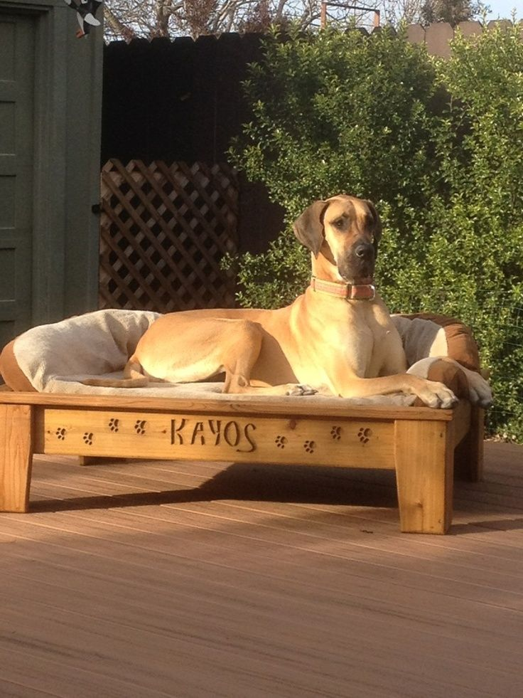 raised dog bed diy Google Search Elevated dog bed