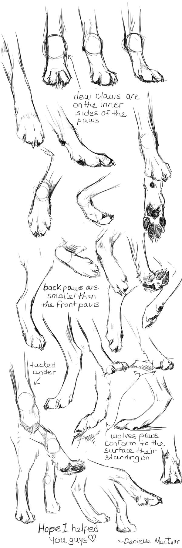 Paw Studies REDONE by Silverwuff.deviantart.com   animal anatomy ...