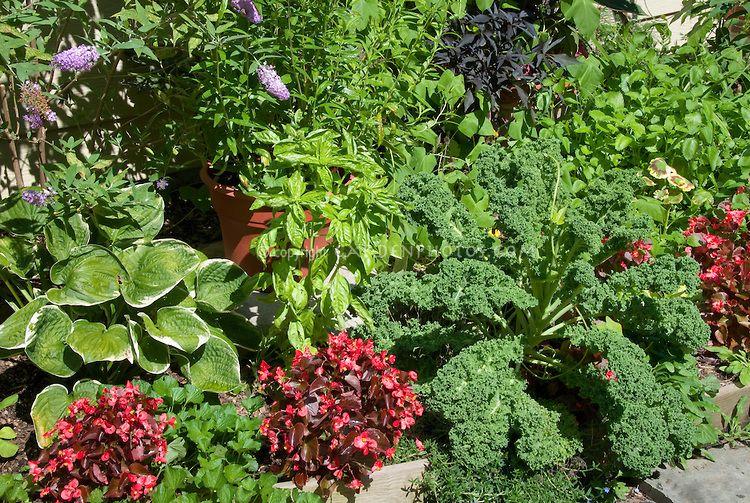 Front Yard Edible Garden Edible Landscaping Flower Landscape Flower Stock Photography