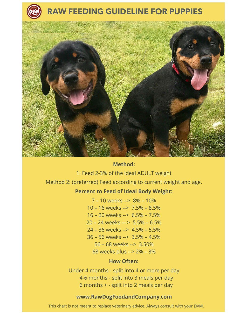 how much raw dog food to feed puppies raw dog food and ...