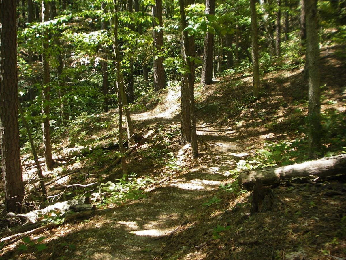 24 Mi Berryman Trail Steelville Mo Mountain Bike