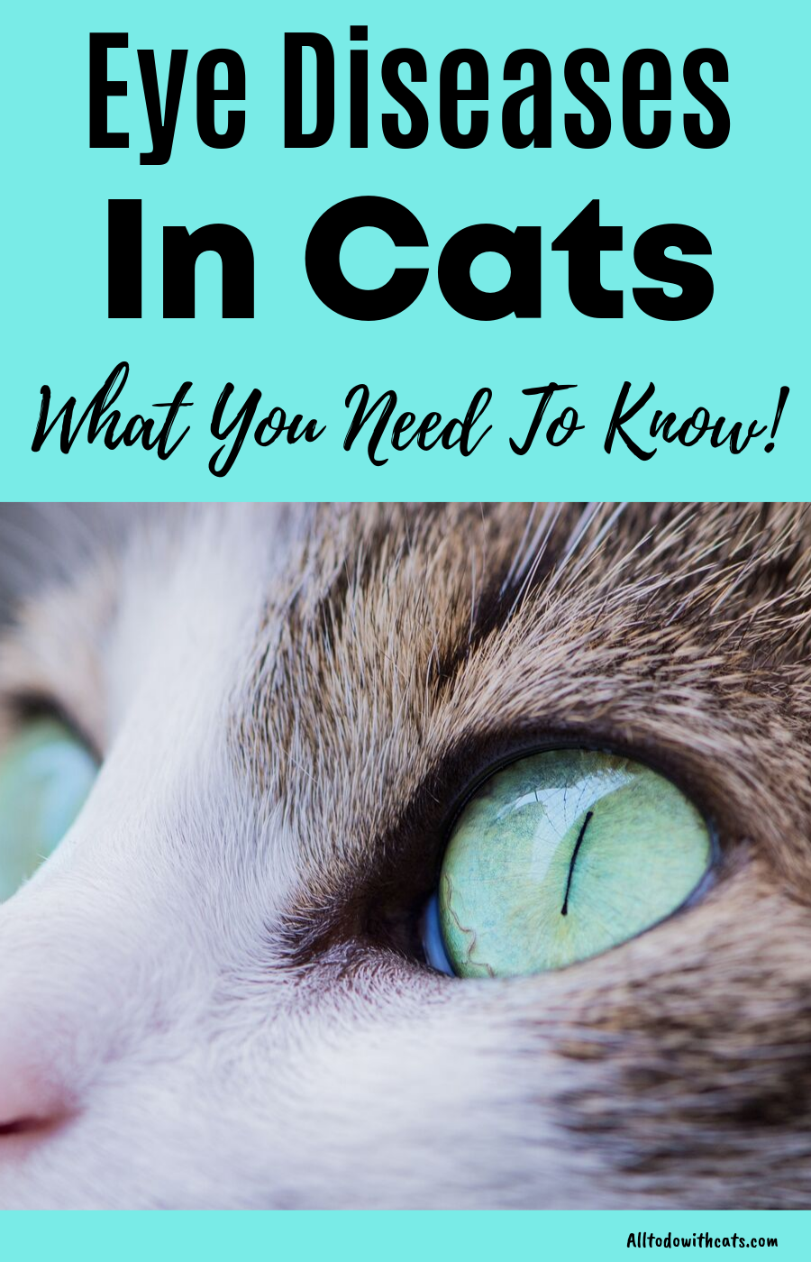 Discover All About Eye Diseases In Cats The Ultimate Guide Cat Eye Infection Kitten Eye Infection Cat Diseases