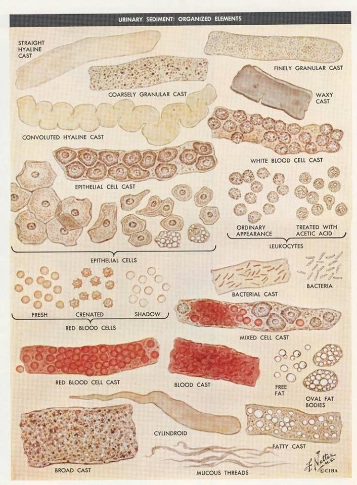 illustration for urinalysis organized elements Medical