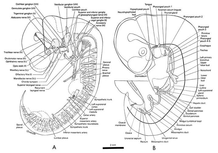 peripheral nervous system of the 10