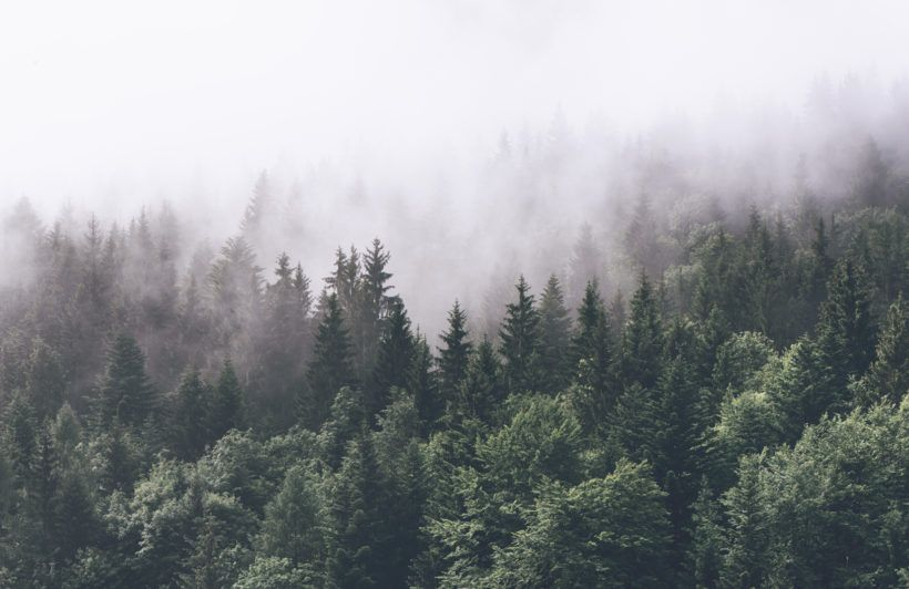 scary foggy forest background