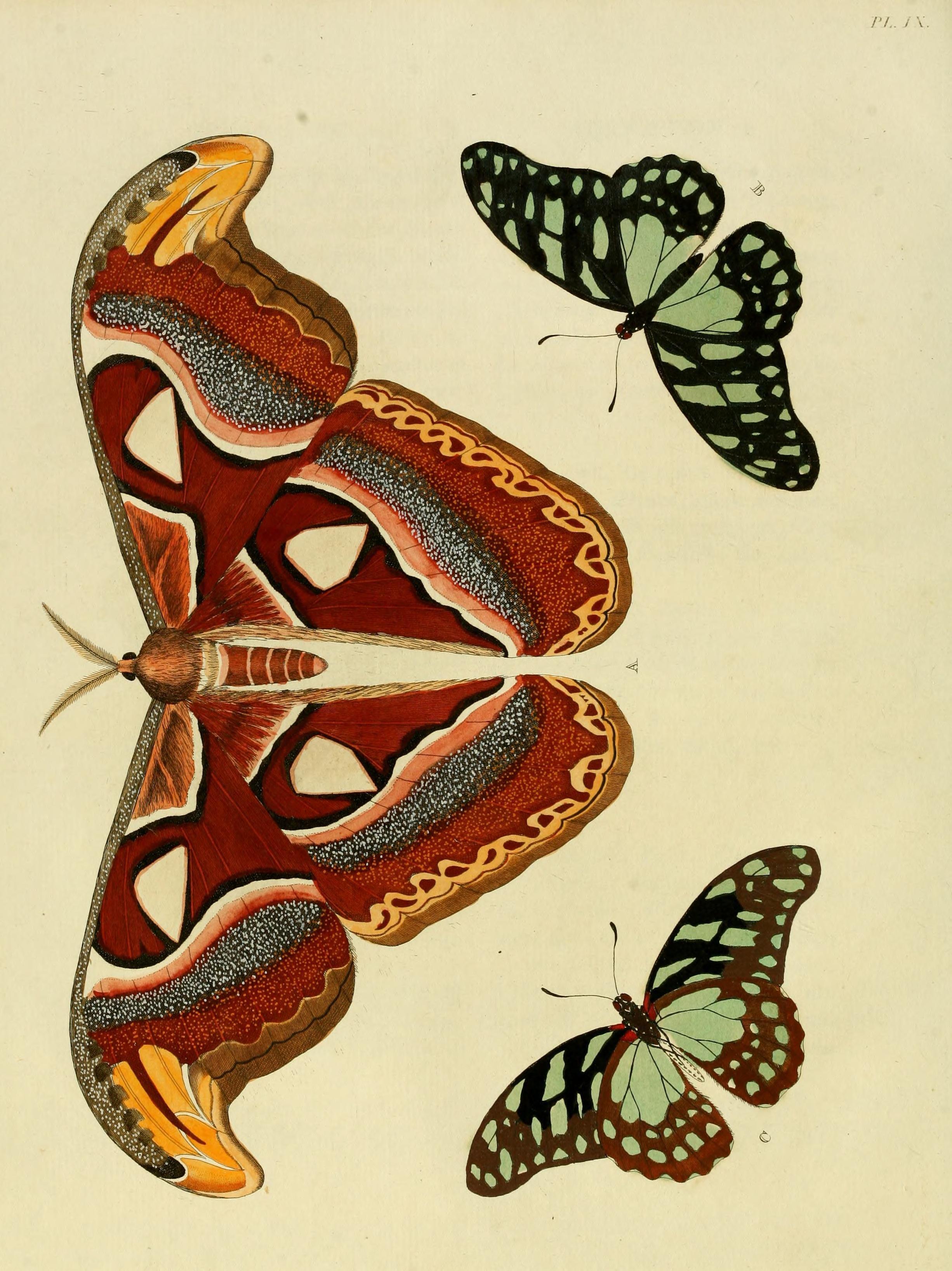re. 1 (1779) - Aanhangsel Werk van het, De uitlandsche kapellen: - Biodiversity Heritage Library