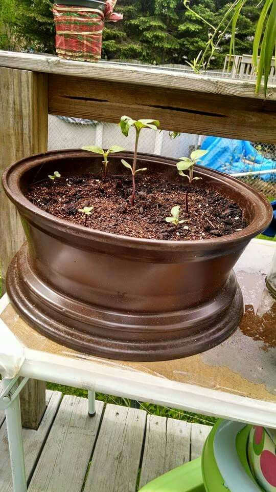 Old Tire Rim Spray Painted Gardening Garden Rims For