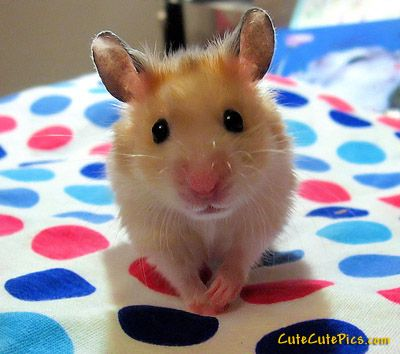 baby mouse cute mice Pinterest Animal, Baby animals and