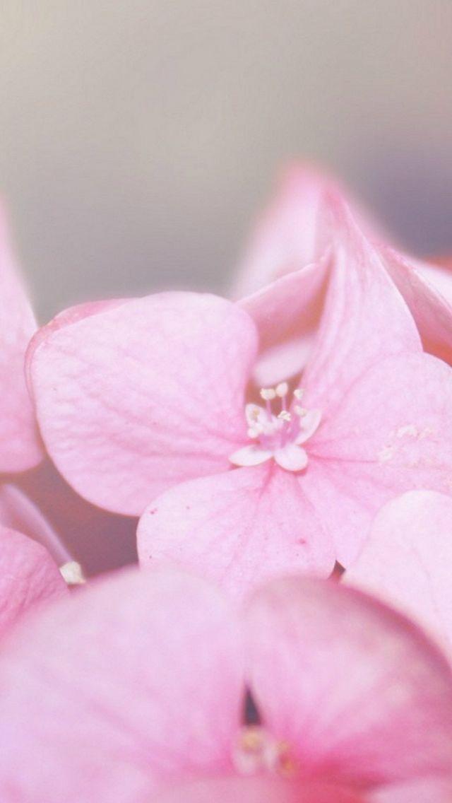 Pure Dreamy Pink Flower Petal Blur IPhone 5s Wallpaper