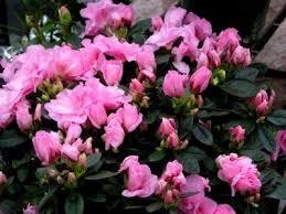pink house plants flowers Google Поиск в 2020 г