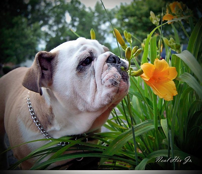 Taking Time To Sniff The Flowers Or Other Things With Images