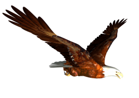 Best Free Png Animated Bald Eagle Flying Hd Animated Bald Eagle Flying Png Images Animals Png Png File Easily W Clip Art Pictures Png Images Animal Footprints