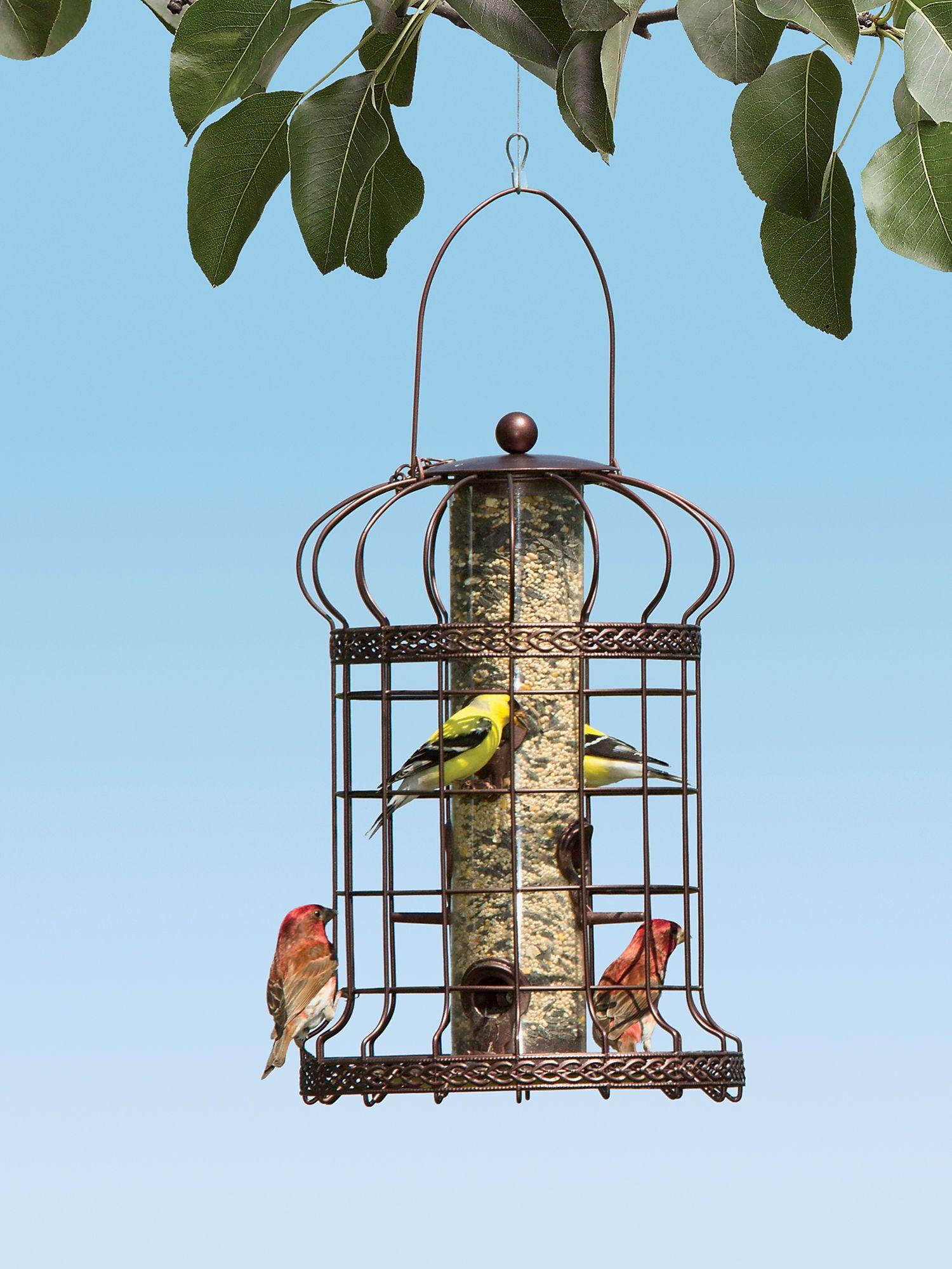 edwardian bird feeder squirrel resistant bird feeder backyard
