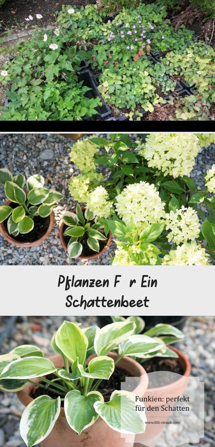 Pflanzen Fur Ein Schattenbeet Pinokyo Schattenbeet Pflanzen Sonnenpflanzen