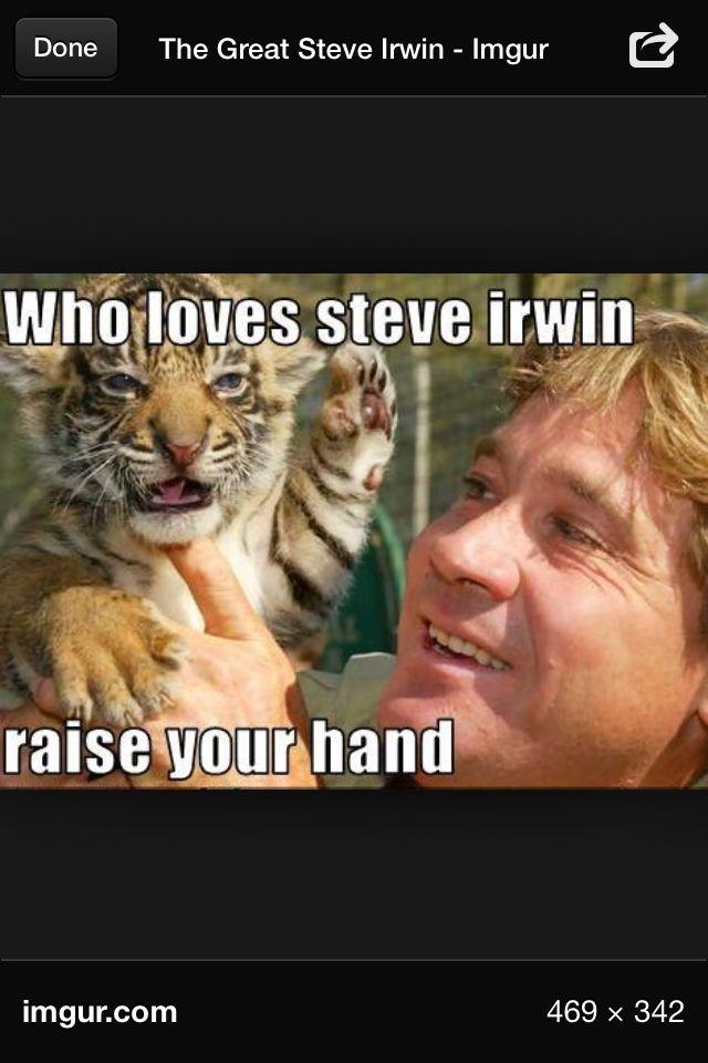 Steve Erwin Steve Irwin Irwin Steve