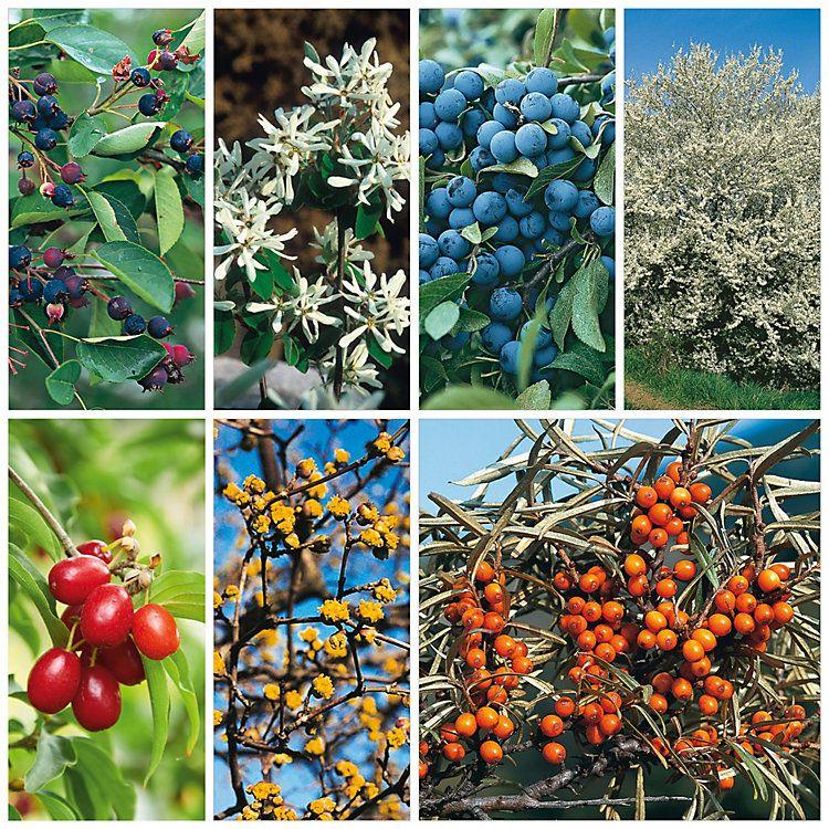 Strauchpaket Wildfruchthecke 1 Manufactum Fruchte Hecke Pflanzen Pflanzen