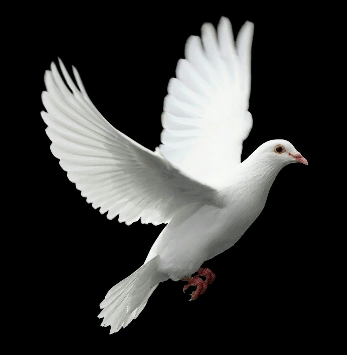 Free Download Flying Dove Transparent Png Image Clipart Picture With No Background Animals Birds Pigeons And Doves Dove Images Dove Flying Dove Drawing
