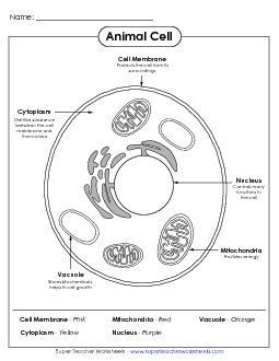 Preview # 1   Education   Pinterest   Plant cell Worksheets and Printable worksheets