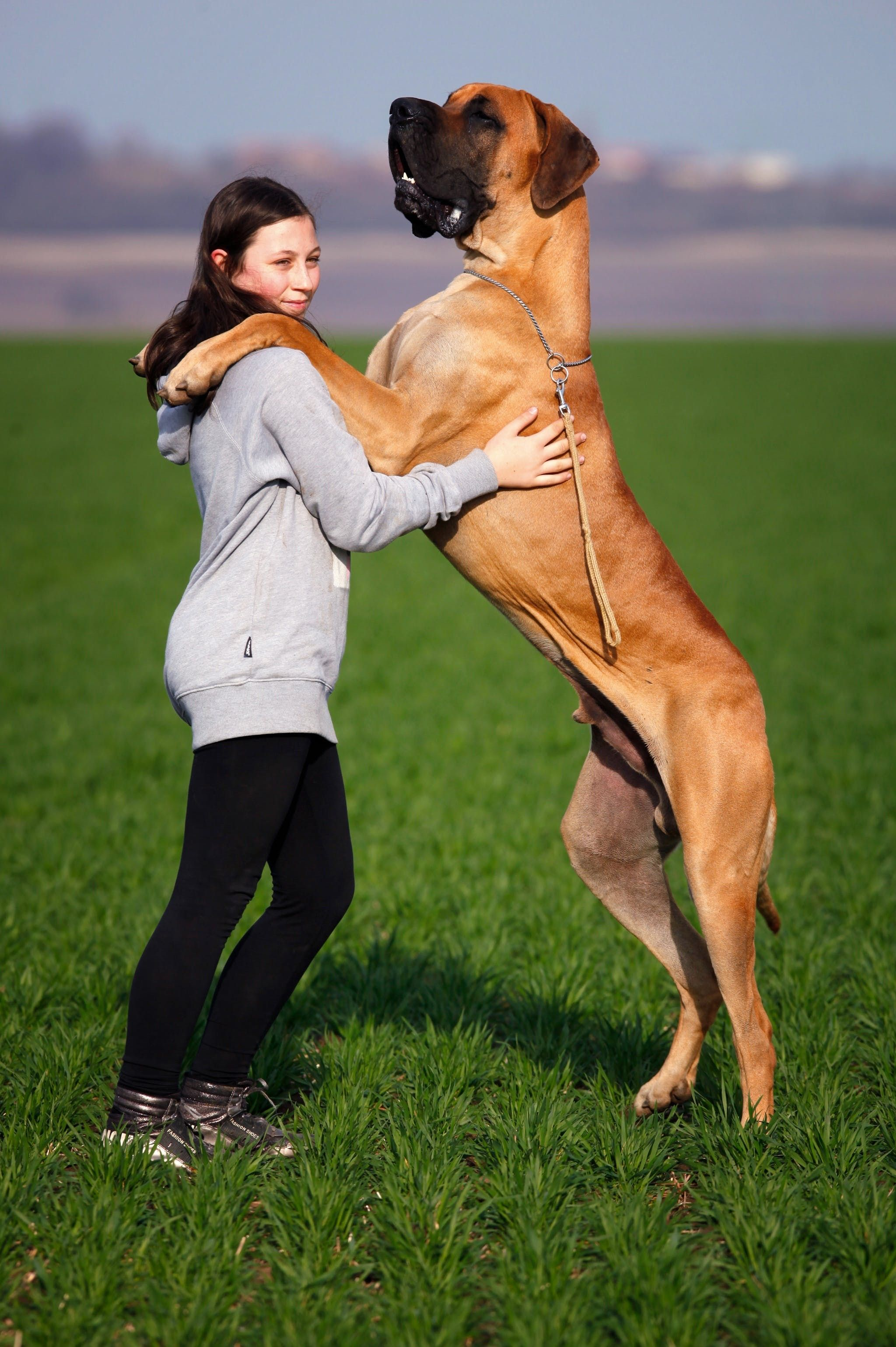 Classy Dog Doglovers With Images Dog Training Obedience