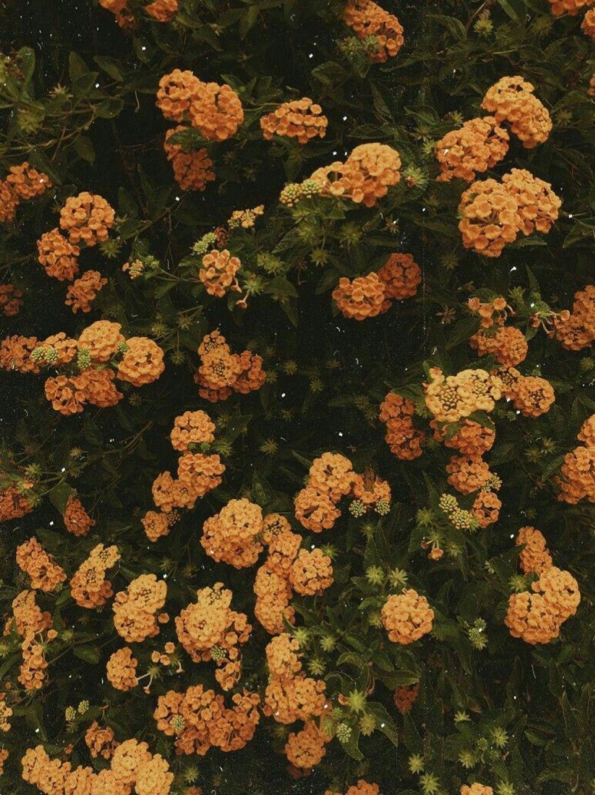 Pinterest Joyful Grace Flower Aesthetic Aesthetic Wallpapers