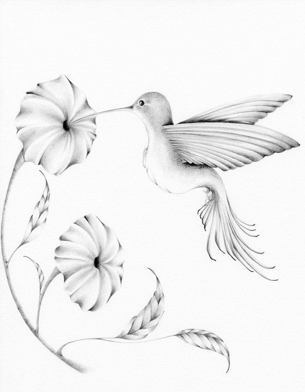 Kolibri zeichnung giclée fine art print von von abitofwhimsyart