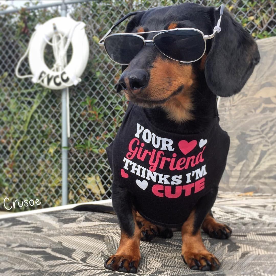 Crusoe the celebrity dachshund by the pool like