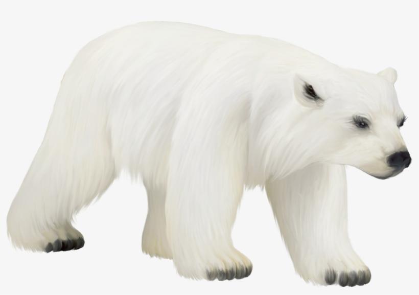 Polar White Bear Png Polar Bear Transparent Png Polar Bear Bear Clipart Polar Bear Cartoon