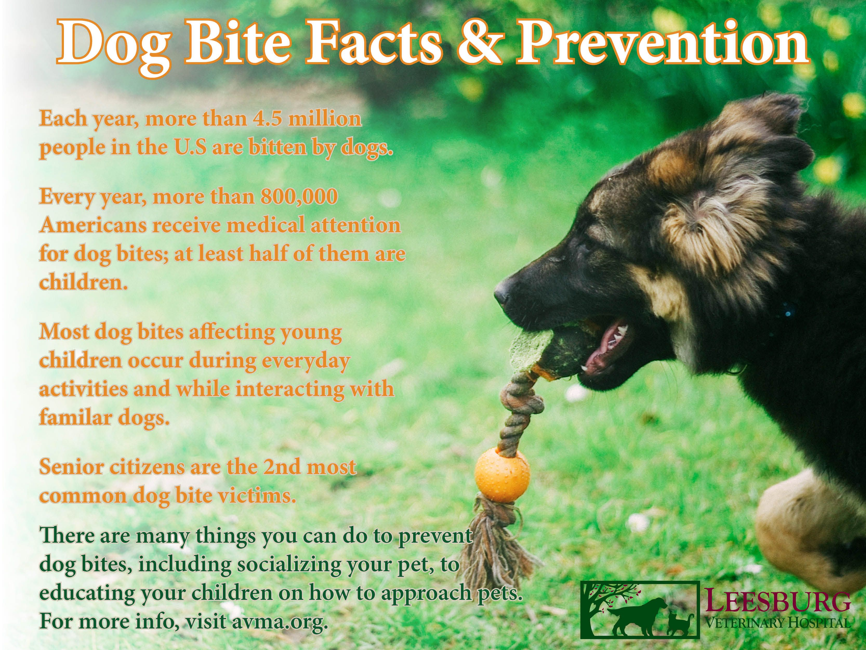 Dog Bite Prevention Facts And Tips Get More Info From The