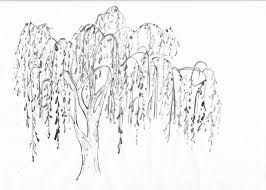 Image Result For Simple Weeping Willow Drawing Willow Tree