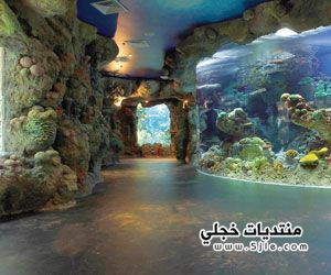 The Fakieh Aquarium Of Jeddah By Www Thesignaturehotels Com Jeddah Aquarium Sister Cities