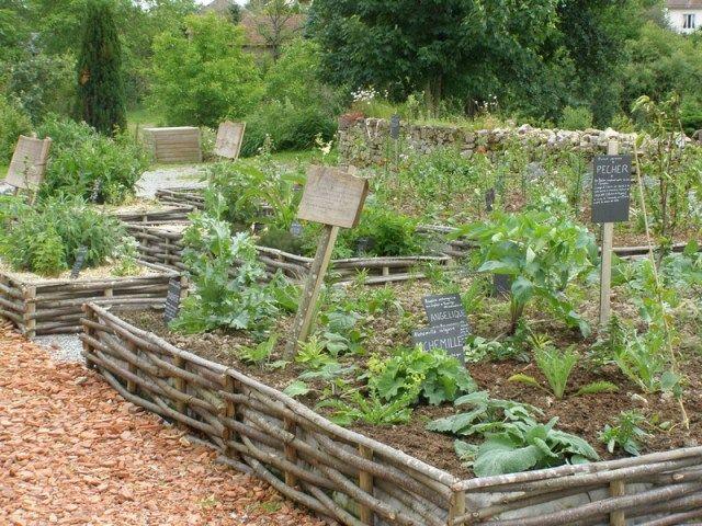 Le Jardin Medicinal Ses Plantes Vertueuses Et Officinales