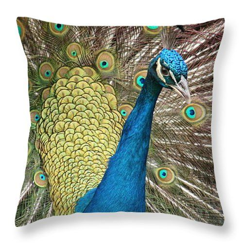 Peacock  Throw Pillow: by, Marcela Martinez http://instaprints.com/products/peacock-marcela-martinez-throw-pillow-14-14.html