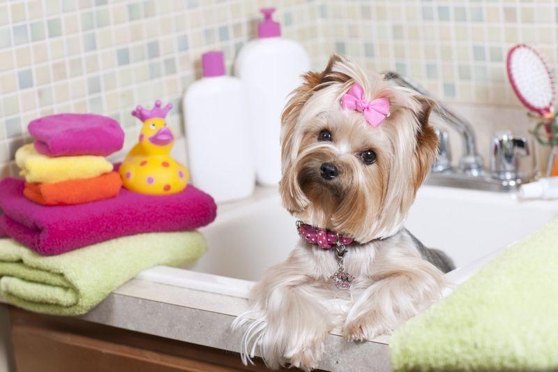 How To Groom Your Dog Diy Beauty Baking Soda Bath Pet Shampoo