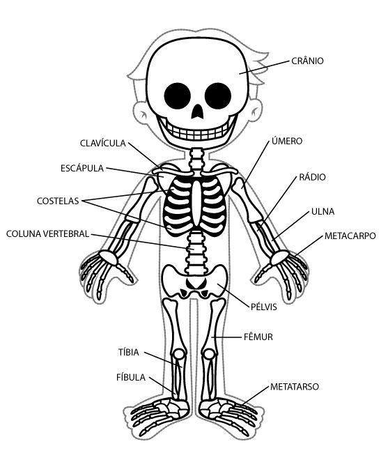 Sistema Oseo Dibujo Buscar Con Google Cuerpo Humano Para Niños Esqueleto Humano Para Niños Imagenes Del Esqueleto Humano