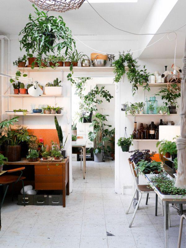 plante verte hopital