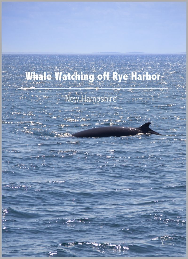 Whale Watching off coast of Rye, NH