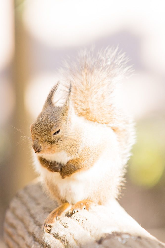 Pin by Angi on N U T S Squirrel, Animals, Pets