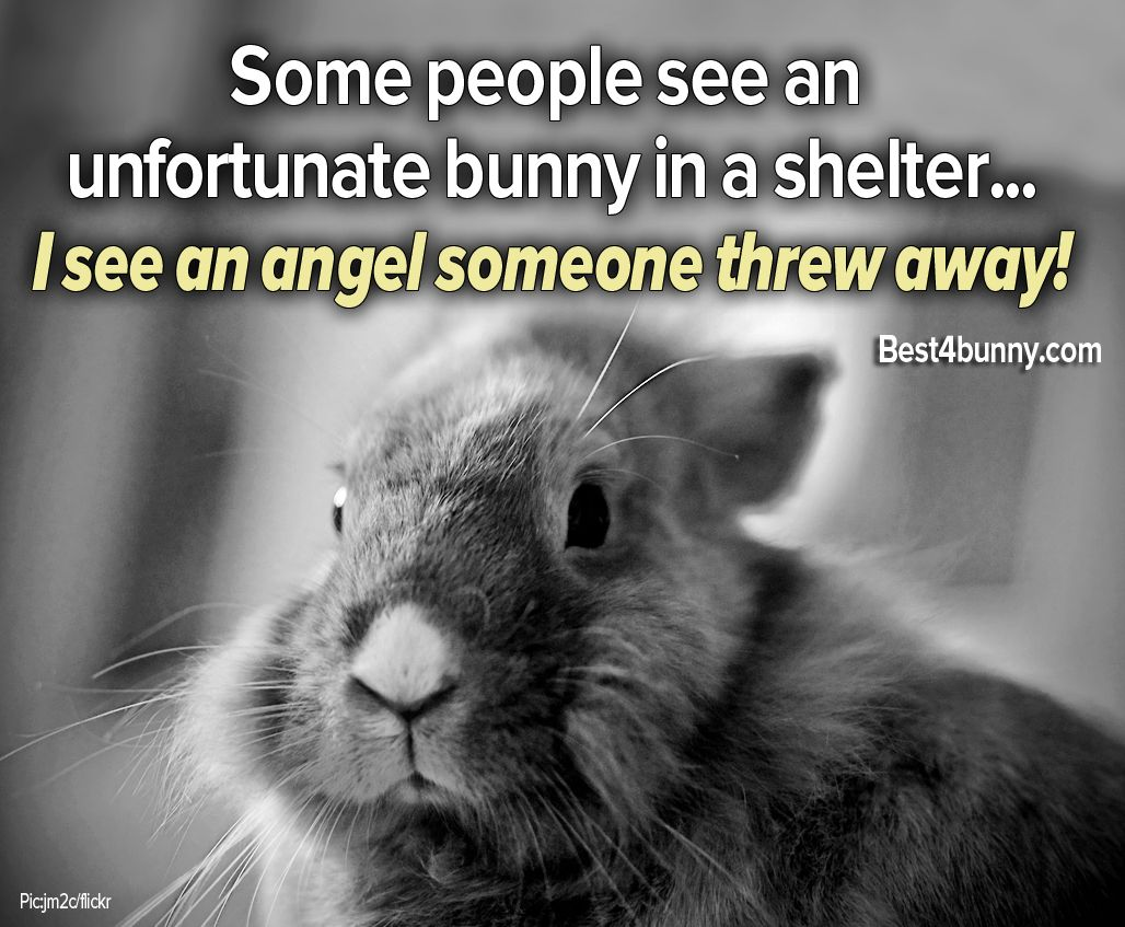 All bunnies are angels... And we will never understand how anyone ...