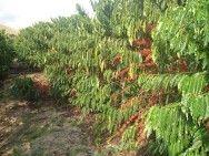 Agropecuária é o setor que mais emprega no Espírito Santo