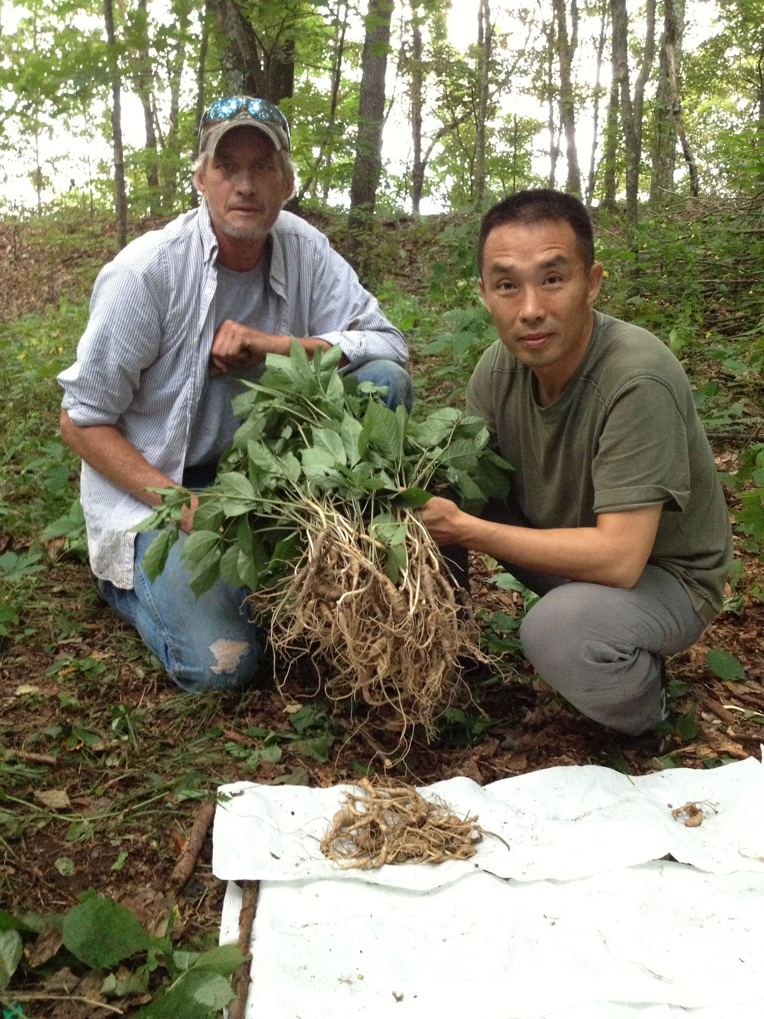 Ginseng In Deutschland Amazing Ginseng Hunt In Tn Ginseng Growing Ginseng Edible