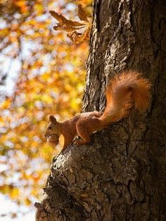 Busy stocking up nuts for the long winter ahead. #Squirrel #Autumn